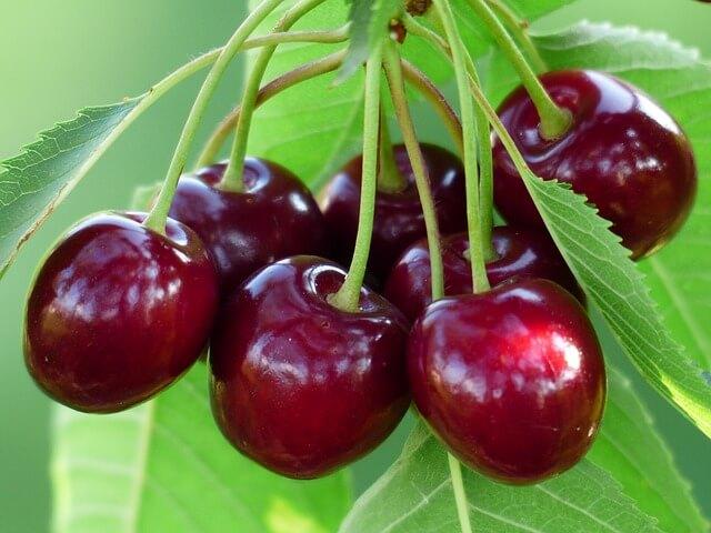 דובדבנים הפרי הכי מתאים לדיאטה