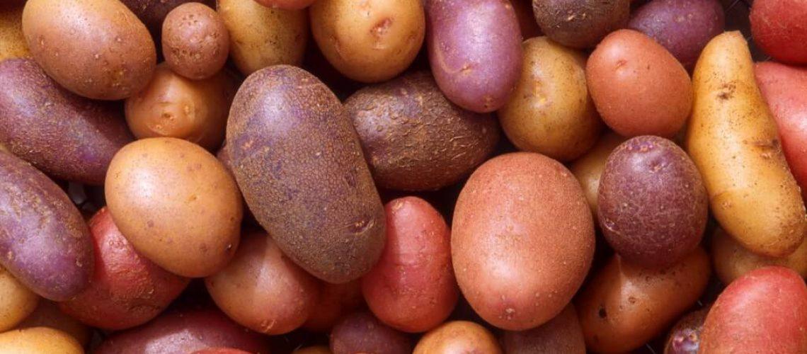 דיאטת תפוחי אדמה